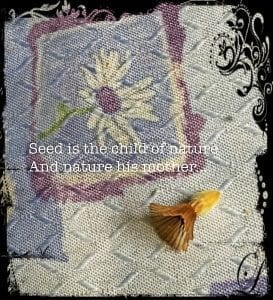 Seed is the child of nature